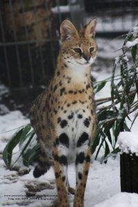 serval verblijven